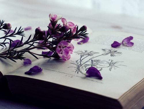 Livres de Jardinage