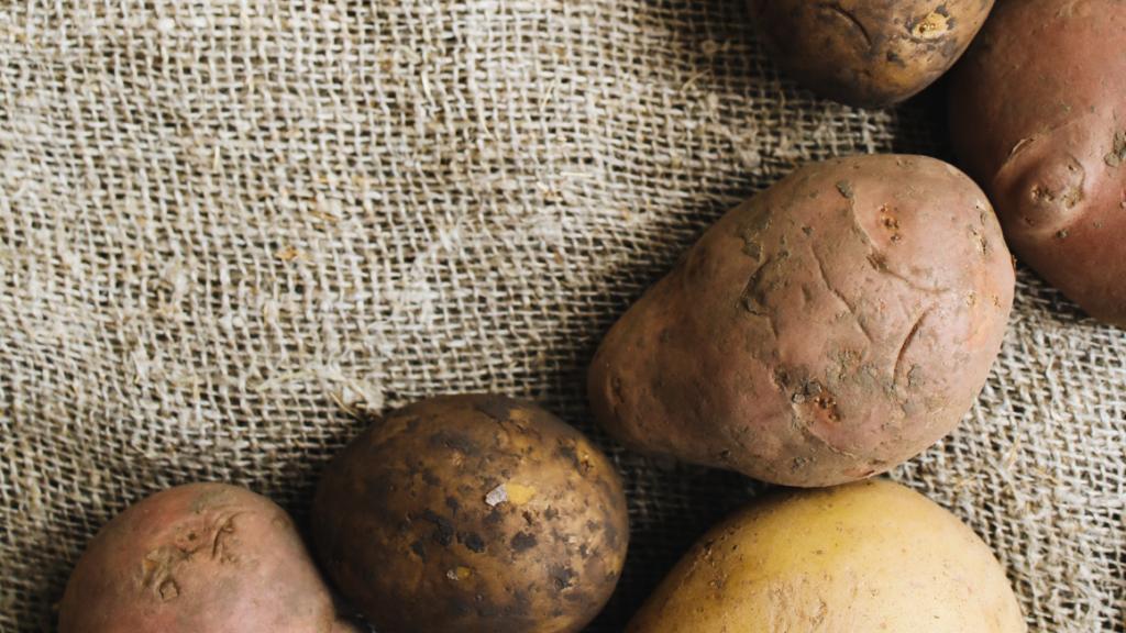 Choisir ses pommes de terre pour les faire germer