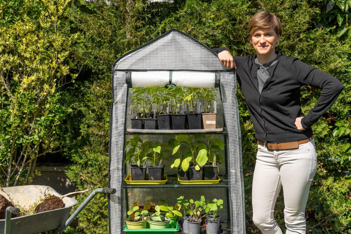 Endurcir ses plants avant des les mettre au potager